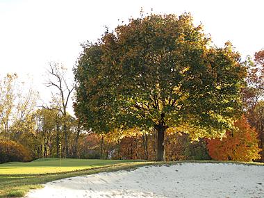 golf-img-4